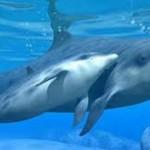 Удивительные дельфины Ч 2