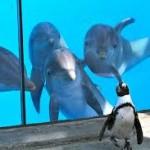 Удивительные дельфины Ч 1